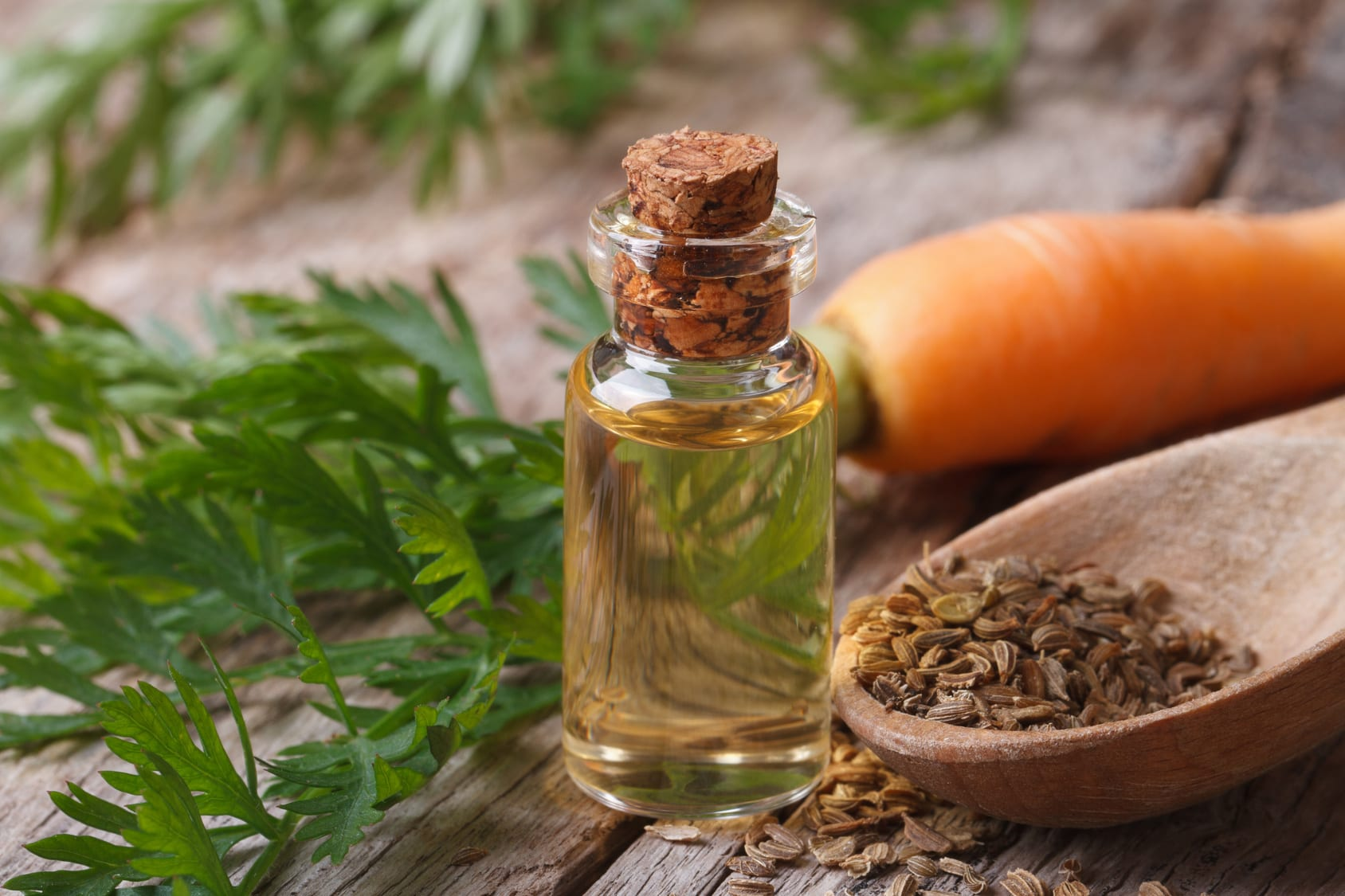 The essential oil of carrot seeds in a glass bottle macro